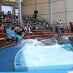夏季限定、特別イルカショーで大量に水浴び