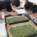 """全国でも珍しい養蚕授業で""""命の大切さ""""を学ぶ"""