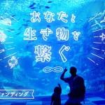 新江ノ島水族館がクラウドファンディング