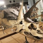 草食恐竜のトリケラトプスは動きが鈍かった?