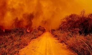 炎に包れるパンタナルの森=2020年9月