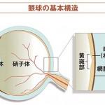 眼球の基本構造
