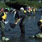 馬場目川で魚を網ですくってつかまえた!