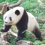 上野動物園、シャンシャンとのお別れはネットで
