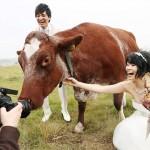 モォ~すぐ結婚、「丑」年にちなみ牛と記念撮影