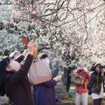 学問の神に春が来た! 湯島天神で梅が見頃