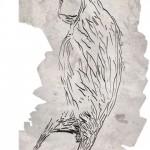 1・7万年前に描かれたカンガルーを発見