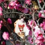 菅原道真の命日に、北野天満宮で「梅花祭」