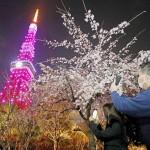 新しい形の花見を、東京タワーも桜色に染まる