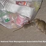 Rats_c0-167-1530-1059_s885x516