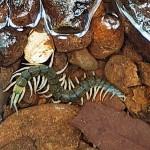 体長20センチ、国内最大の新種ムカデを発見