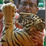 僕の名は「ジ生後5カ月のベンガルトラに飲み物を与える飼育員=バングラデシュ・チッタゴン(AFP時事)ョー・バイデン」、将来は大物?