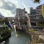 コロナ禍で観光客減も安里川の鯉のぼりが彩り