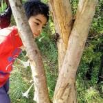 小学生の研究が米学術誌「エコロジー」に掲載