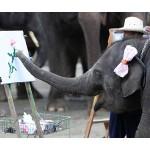 「母の日」にカーネーション、感謝を伝えるゾウ