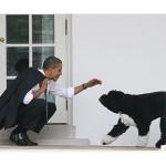 「忠実で優しい存在」、オバマ氏の愛犬が死ぬ
