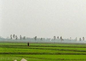 ベトナム・ハノイ近郊の水田(UPI)