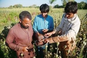 ケシから生アヘンを採取するアフガニスタンの農家ら=2020年5月、東部ナンガルハル州(EPA時事)