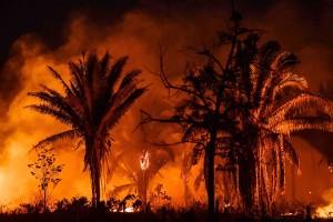 ブラジル北部バラ州で、炎を上げて燃える熱帯雨林=2019年10月(AFP時事