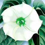 「Jimson Weed / White Flower No.1」1986-1987 Georgia O'Keeffe © Musee GeorgiaO'Keeffe / Adagp, Paris Photography © Crystal Bridges Museum of American Art,Edward C. Robison III