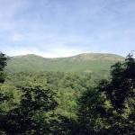 山道の木々の間から眺めた至仏山