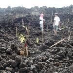 植林の具合を確認する参加者たち
