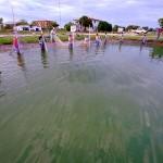 養殖池で魚を追い込む先住民スタッフ