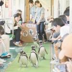 愛くるしいマゼランペンギンが列車に乗車