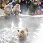 「温泉のサル」旅行者に人気、来年えと賀状にも